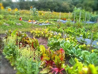 Community Gardens at Mounce's Meadow and Coast Guard Hill
